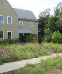 native prairie grasses sustainable landscape in st. paul